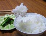 【送料無料】28年10月収穫 熊本県産米 森のくまさん 精白米10kg