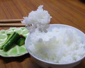 画像1: 【送料無料】28年10月収穫 熊本県産米 森のくまさん 精白米10kg