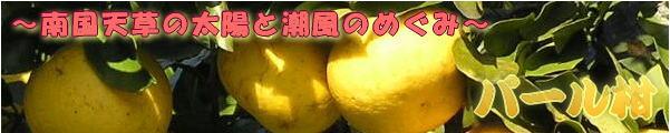 パール柑・パールカン・ぱーるかん・熊本産・天草産